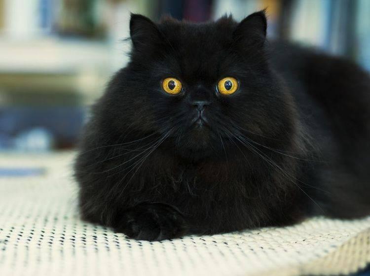 Clickern mit Katzen: Zubehör – Bild: Shutterstock / Einar Muoni