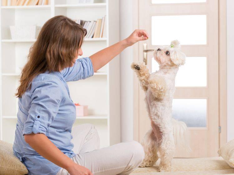 Ein süßer Trick: Männchen machen – Bild: Shutterstock / Monika Wisniewska