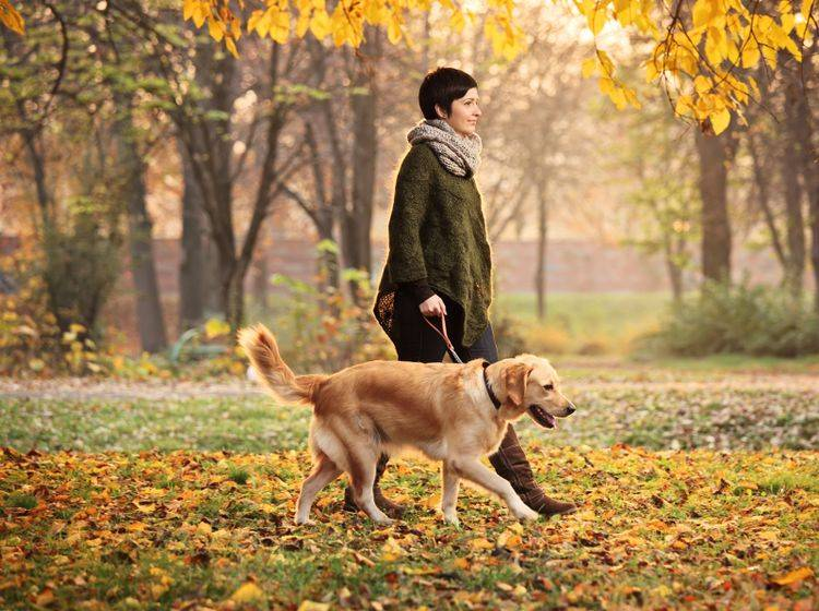Hunde mit Jagdtrieb gehen nicht immer entspannt spazieren – Bild: Shutterstock / Ljupco Smokovski