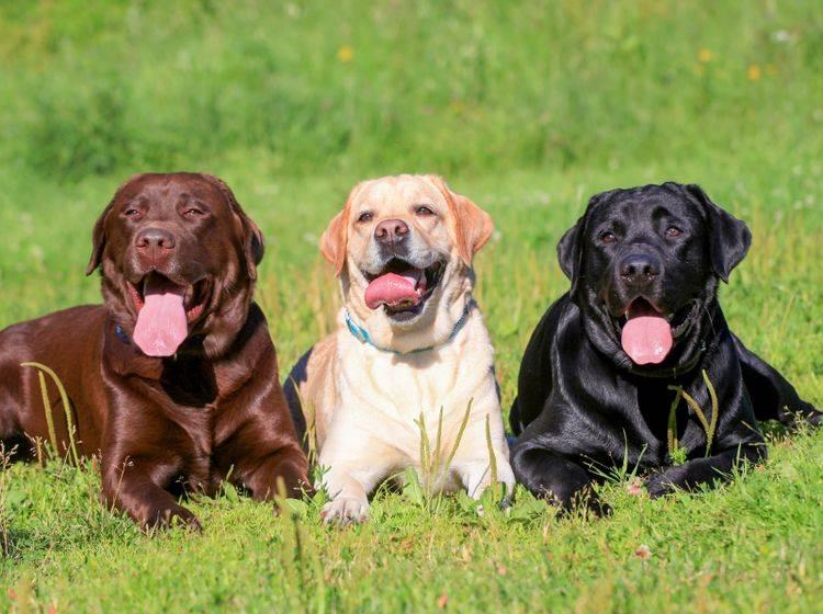 Zu wem passen Hunderassen mit Jagdtrieb? – Bild: Shutterstock / Marina Jay