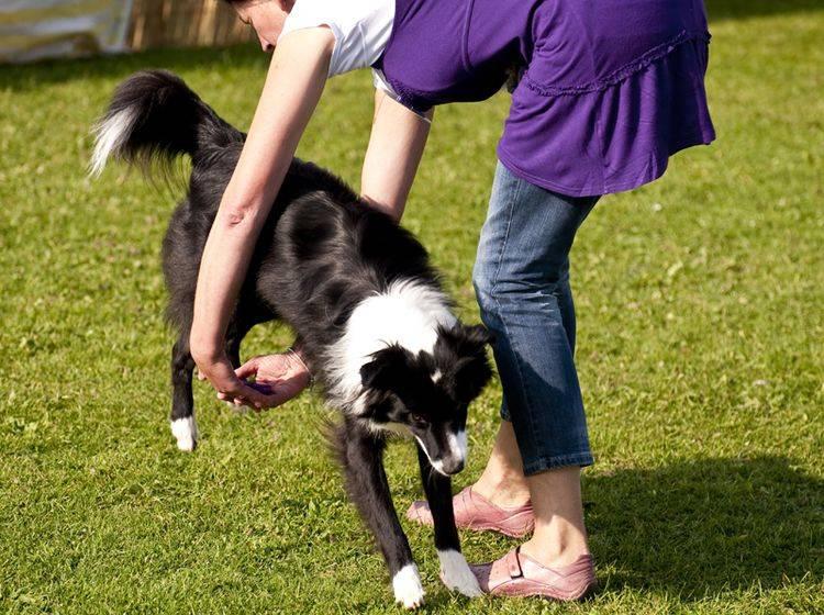 Eine Vielzahl von Übungen macht Dog Dancing zum Spaß für Mensch und Hund – Bild: Shutterstock / bluecrayola