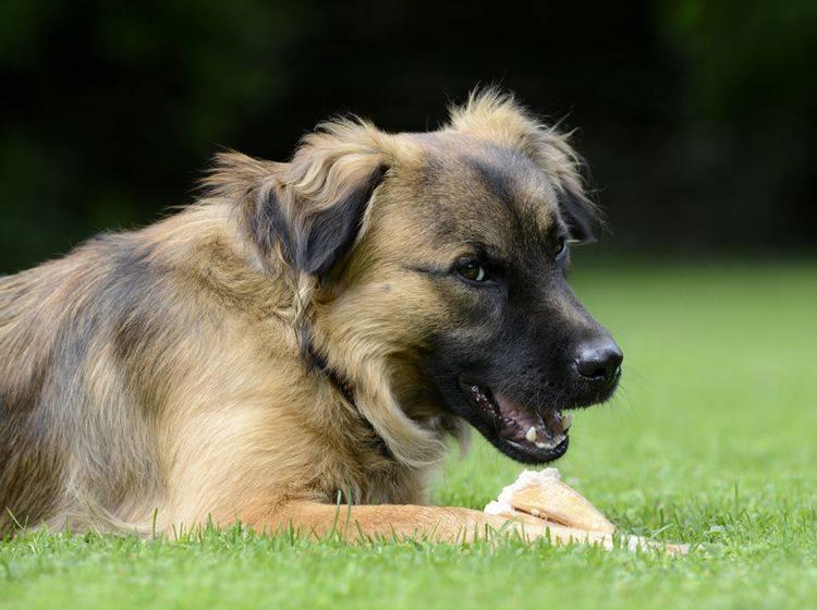Sie können einiges für die Abwehrkräfte Ihres Hunds tun – Bild: Shutterstock / Schubbel