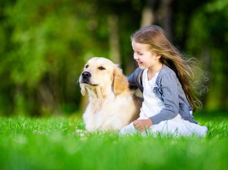 Der Golden Retriever ist ein sehr liebenswerter Familienhund – Bild: Shutterstock / Karramba Production