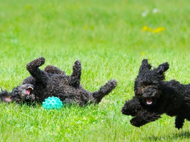 Tierisch lecker: Hundespielzeug mit Snacks – Bild: Shutterstock / KellyNelson