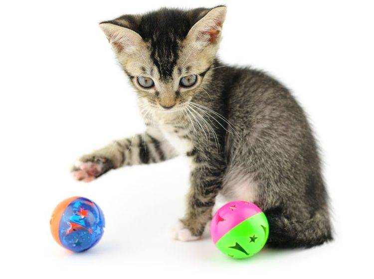 Katzenspielzeug zum Befüllen mit Snacks – Bild: Shutterstock / orman Chan