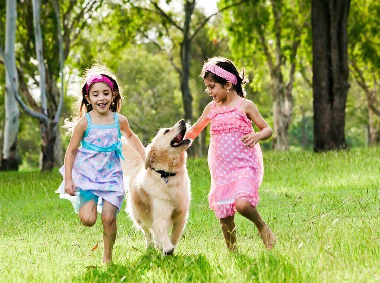 Golden Retriever sind schöne große Familienhunde – Bild: Shutterstock / Martin Valigursky
