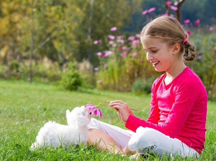 Kinder und Malteser sind in der Regel eine gute Kombination – Bild: Shutterstock / gorillaimages