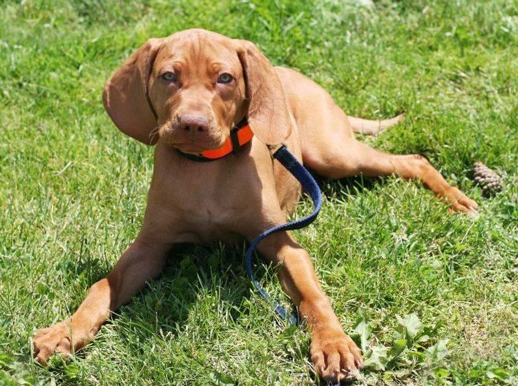 Hundehalsband und Leine mit Leucht-Effekt – Bild: Shutterstock / Joy Brown