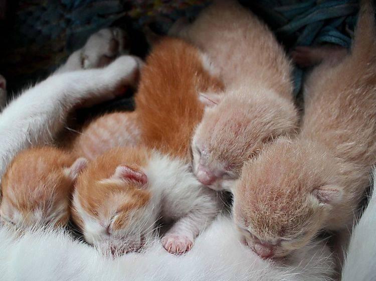 Toxoplasmose ist besonders gefährlich für Katzenbabys – Bild: Shutterstock / Grey Carnation