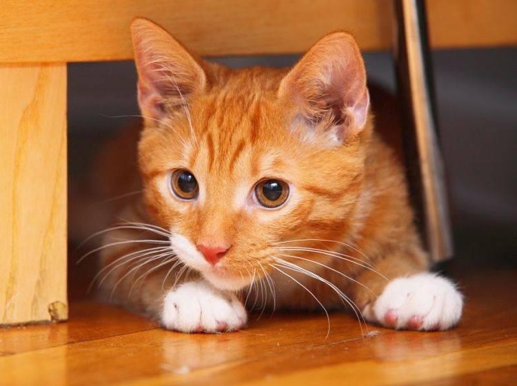 Spielschienen für aktive Katzen – Bild: Shutterstock / Voyagerix