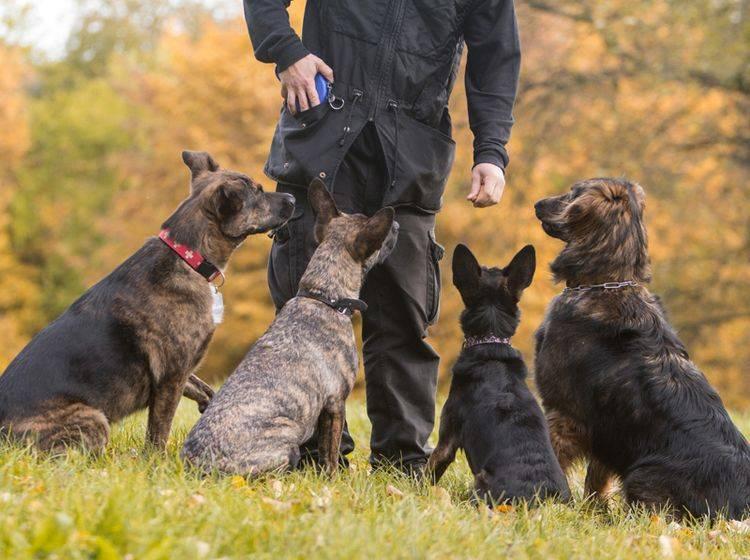 Gruppentraining in der Hundeschule ist meist die günstigste Variante – Bild: Shutterstock / Hysteria