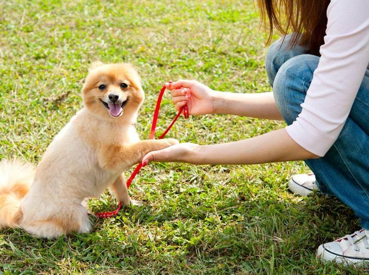 Haben Sie nicht zu hohe Leistungserwartungen an den ersten Besuch in der Hundeschule – Bild: Shutterstock / takayuki