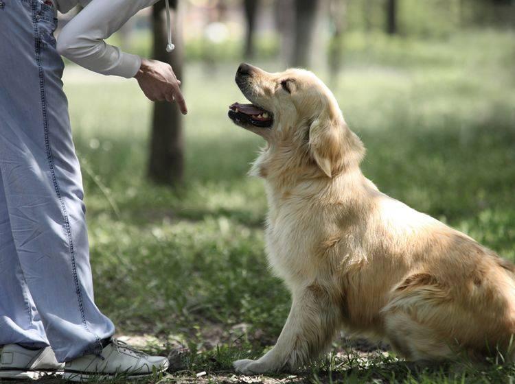Hundeausbildung bei einem privaten Trainer: Eine gute Möglichkeit – Bild: Shutterstock / Soloviova Liudmyla