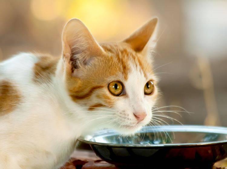 Katzen mit Freigang haben sehr unterschiedliche Nahrungsbedürfnisse – Bild: Shutterstock / Leyla Ismet