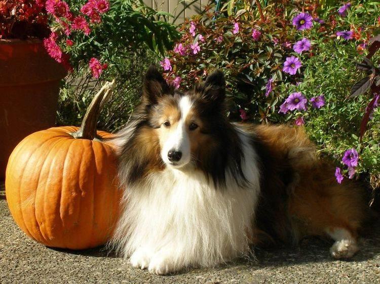 Herbstliches Hundefutter mit Kürbis & Co – Bild: Shutterstock / Karen Walker