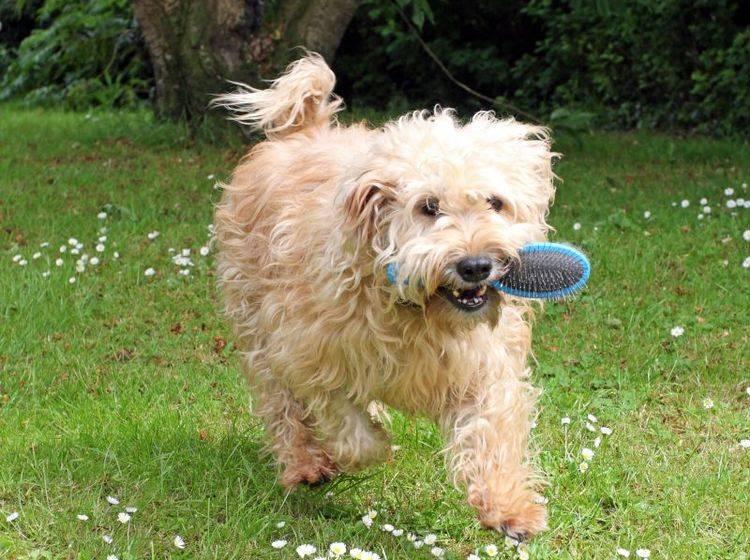 Unterstützend für ein gesundes Fell: Die Bürste – Bild: Shutterstock / Denise Allison Coyle