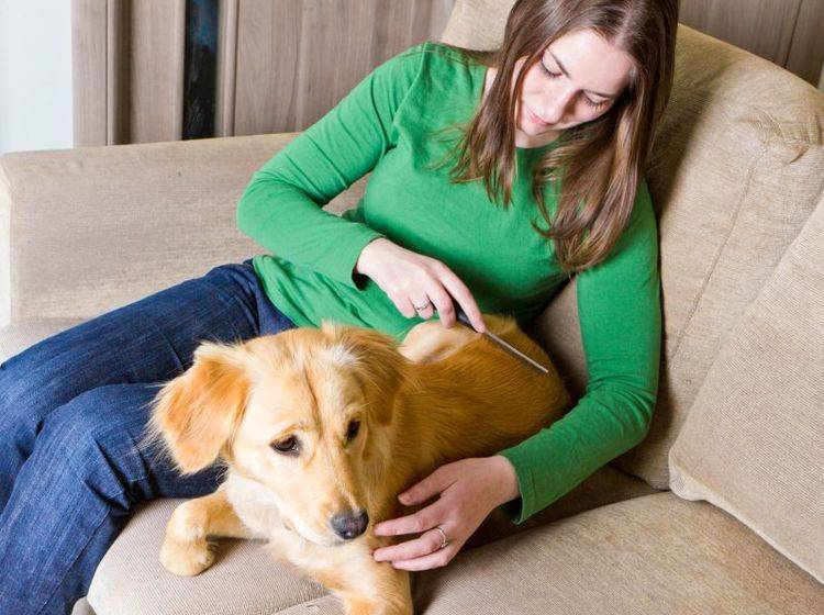 Schuppen beim Hund entdeckt man oft bei der Fellpflege – Bild: Shutterstock / Olga Marc