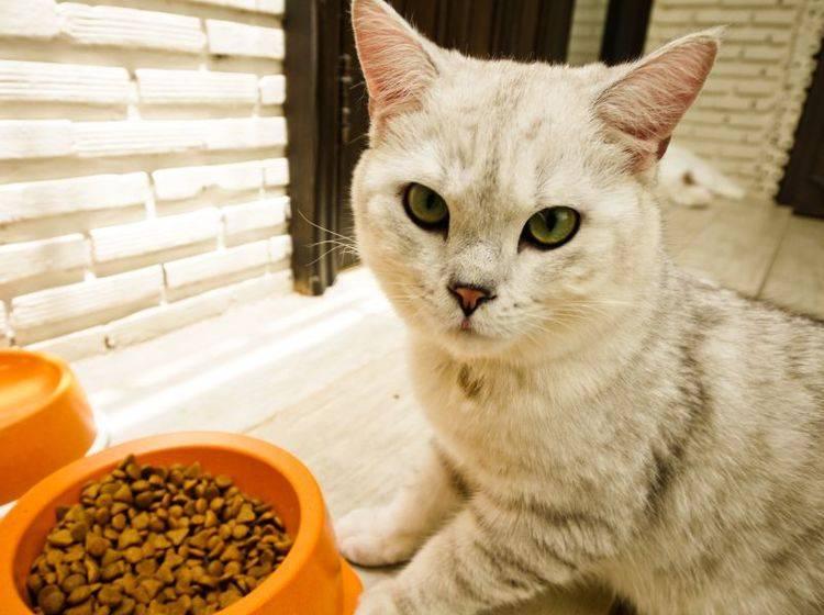 Lecker Kürbis! Herbstliche Katzensnacks und Menüs – Bild: Shutterstock / icyyoke