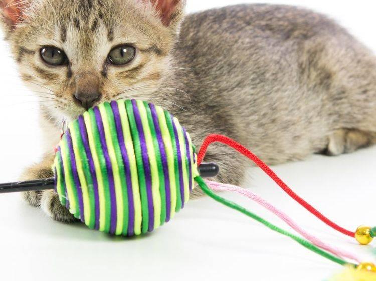 Der Toyger ist ein verspielter kleiner Kerl – Bild: Shutterstock / Sorapop Udomsri