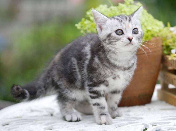 Nach einem Umzug ist alles aufregend für die Katze – Bild: Shutterstock / KPG_Payless