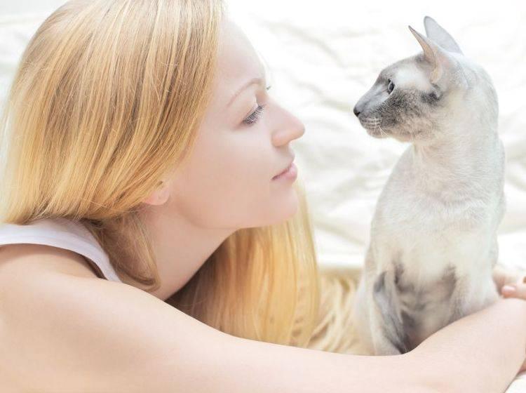 Clickertraining mit Katzen macht Spaß und sorgt für Abwechslung – Bild: Shutterstock / Petr Malyshev