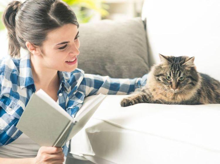 Clickertraining mit Katzen: Auch der Mensch muss auf einiges achten – Bild: Shutterstock / Stokkete