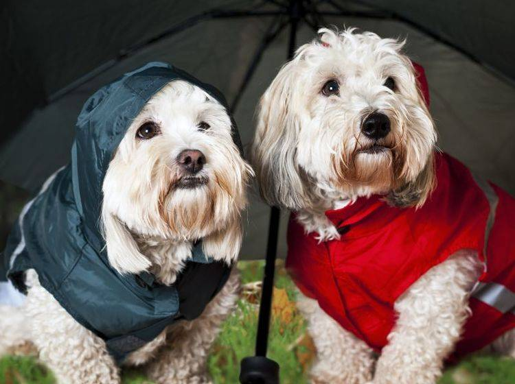 vHundemäntel für Regentage – Bild: Shutterstock / Elena Elisseeva