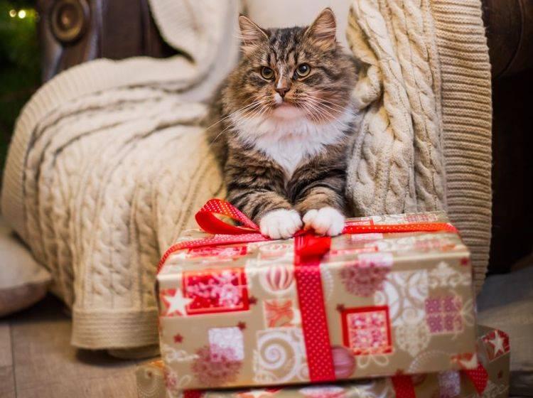 Süße und kreative Katzenweihnachtsgeschenke – Bild: Shutterstock / dezi