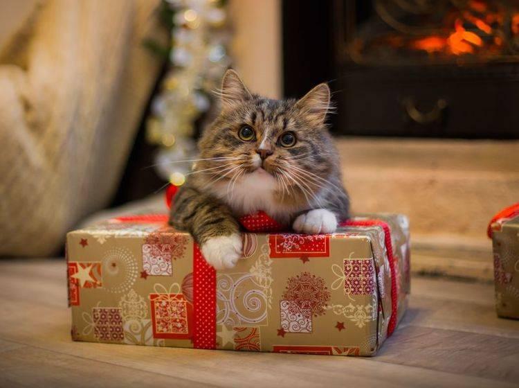 Keine gute Idee: Tiere als Weihnachtsgeschenke – Bild: Shutterstock / dezi