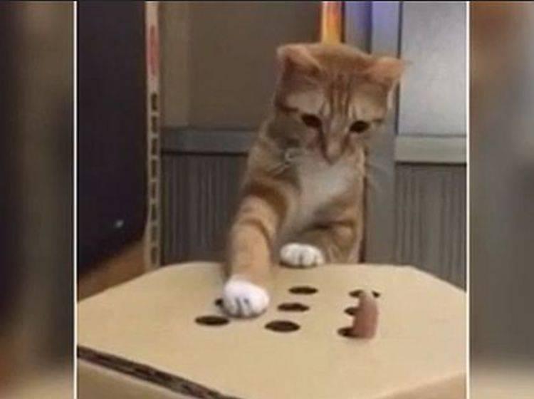 Wie süß: Ein rotes Kätzchen zeigt sein Lieblingsspiel – Bild: T-Online