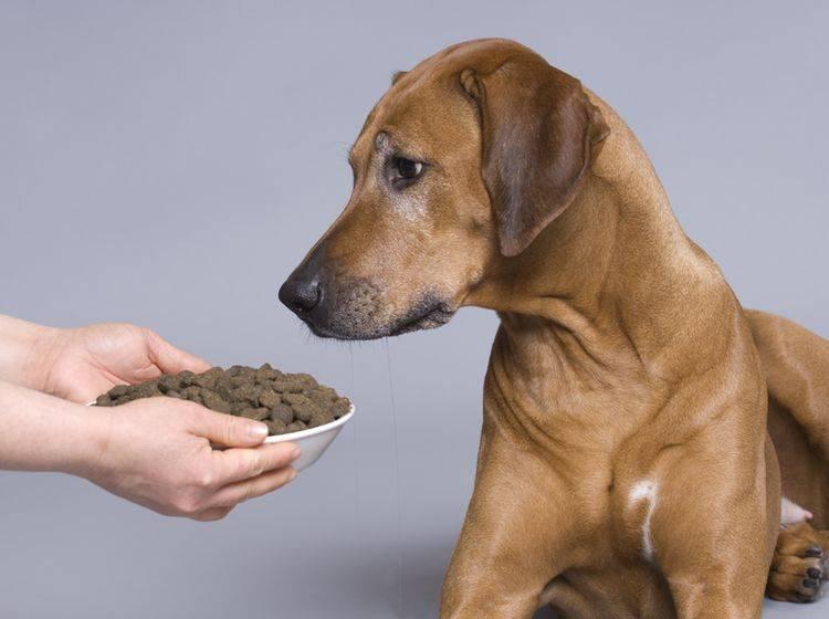 Ein Hund mit Arthrose sollte Übergewicht vermeiden – Bild: Shutterstock / Nancy Dressel