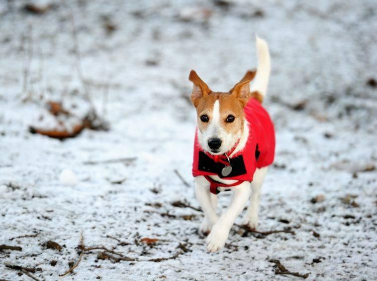 Damit der Hund nicht friert, hilft ein bequemes Mäntelchen – Bild: Shutterstock / Godrick