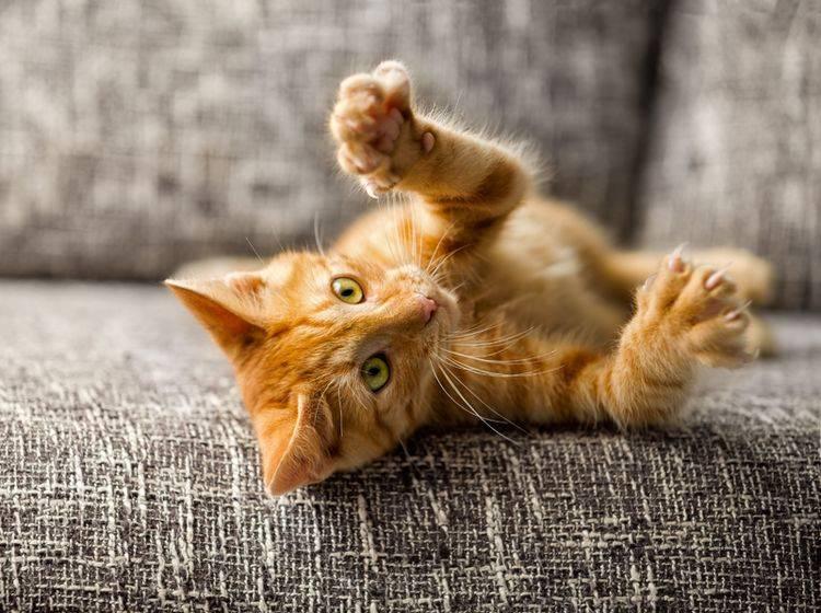 Bereits Kätzchen können lernen ohne Kratzen zu spielen – Bild: Shutterstock / Lucky Business