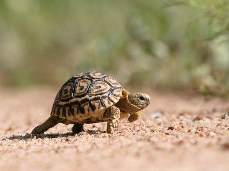 """Auf die Plätze, fertig, loooooooos!"" – Bild: Shutterstock / JI de Wet"