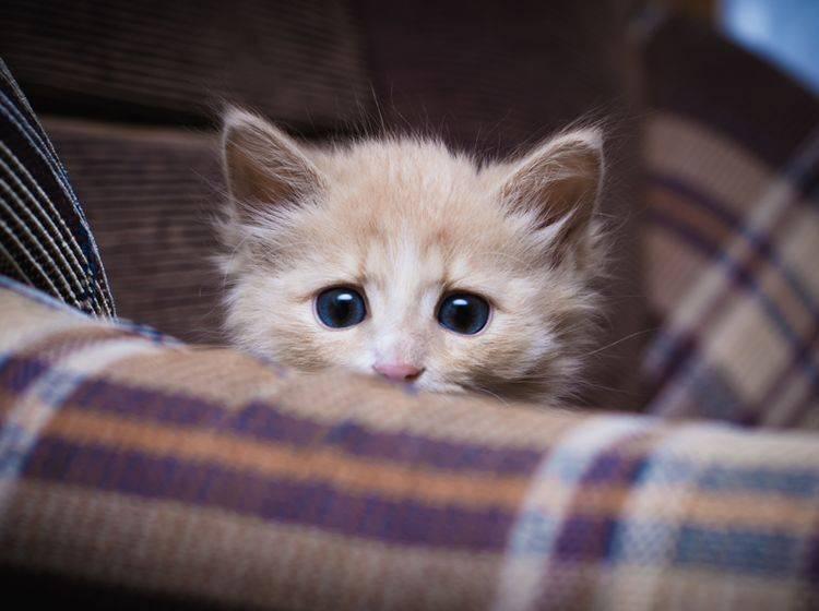 Mit Gelassenheit können Sie eine verängstigte Katze beruhigen – Bild: Shutterstock / Khamidulin Sergey