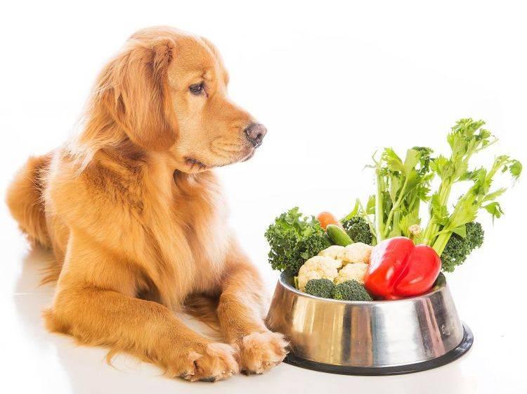 Gemüse passt gut in eine abwechslungsreiche Hundeernährung – Bild: Shutterstock / Mat Hayward