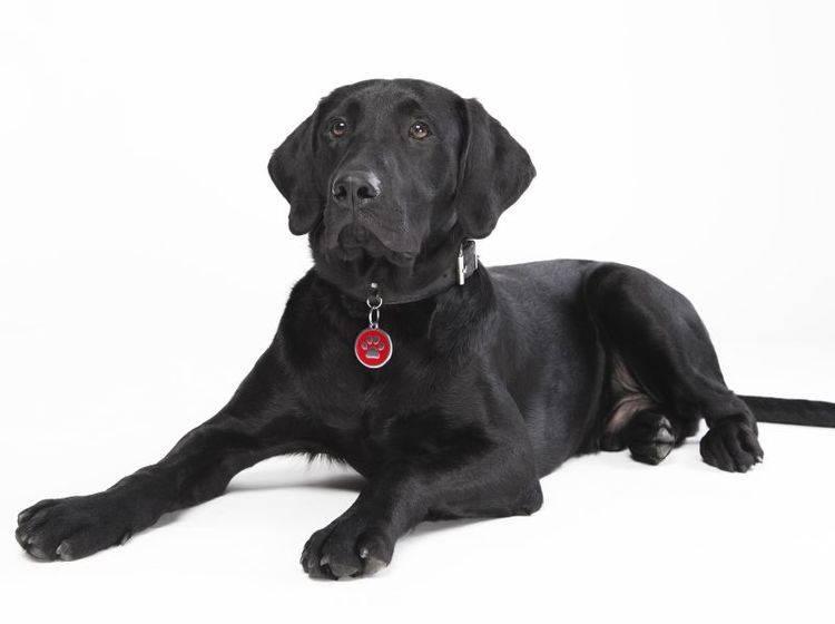 Hundemarken: Verschiedene Arten – Bild: Shutterstock / Ivan Mladenov