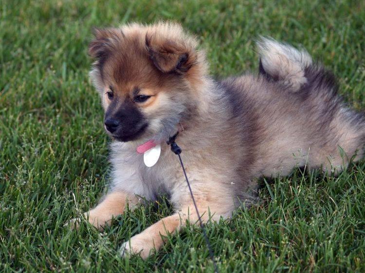 Sicherheit im Dunkeln: Leuchtanhänger für Hunde – Bild: Shutterstock / LaNae Christenson