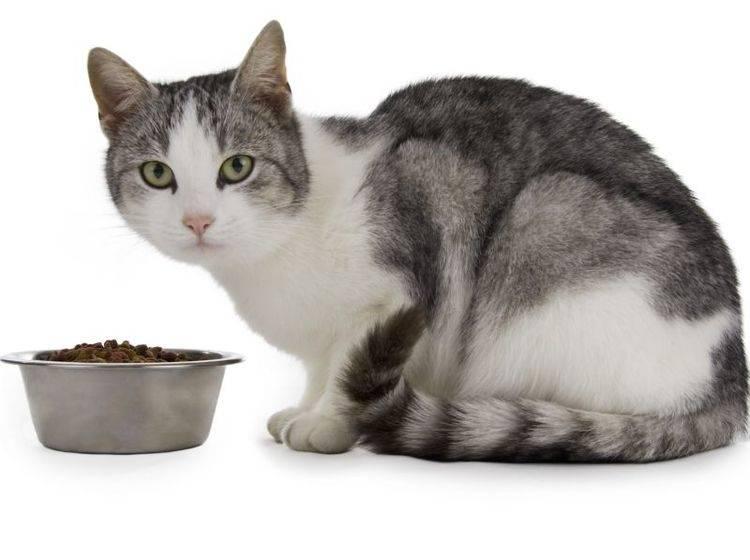 Taurin ist wichtig für die Katzengesundheit – Bild: Shutterstock / Tompet