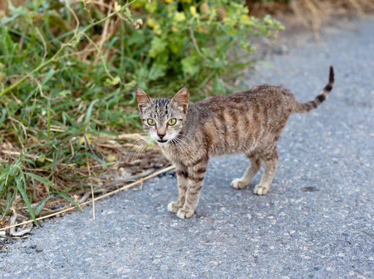 Eine Gewichtsabnahme bei Katzen sollte vom Tierarzt untersucht werden – Bild: Shutterstock / foaloce