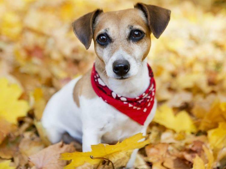 Schicke Halstücher für Hunde – Bild: Shutterstock / Fly_dragonfly