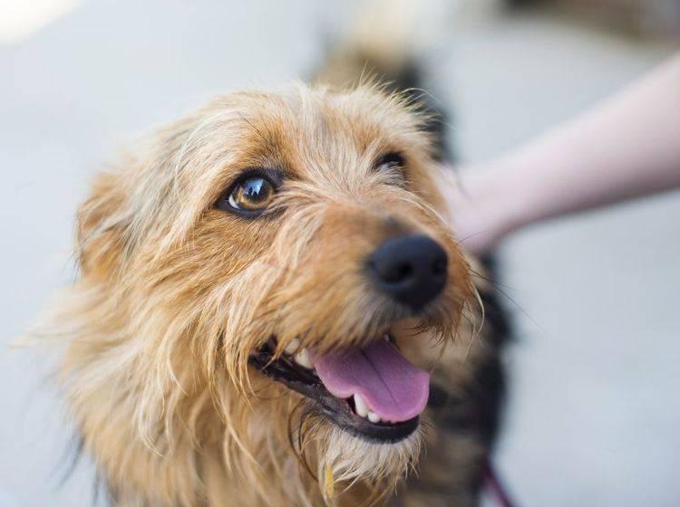 Streicheln, loben, clickern: Es gibt viele Möglichkeiten, einen Hund zu motivieren – Shutterstock / Halfpoint