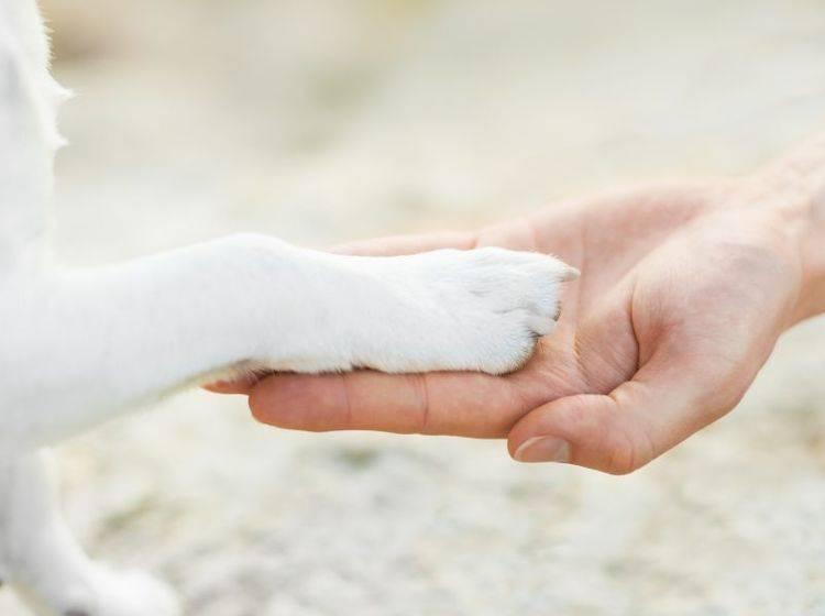 Säubern, desinfizieren, verbinden: Erste Hilfe bei Verletzungen – Bild: Shutterstock / Javier Brosch