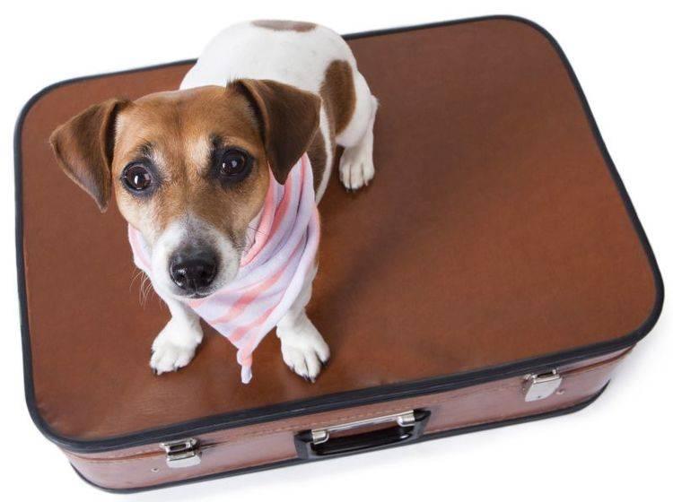 Reiseset für Hunde: Verschiedene Modelle – Bild: Shutterstock / Fly_dragonfly