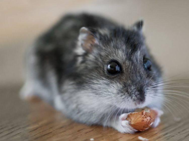 """Unser erster Kandidat ist sich sicher: """"Das ist die leckerste Nuss, die ich je gegessen habe!!!"""" – Bild: Shutterstock / Smit"""