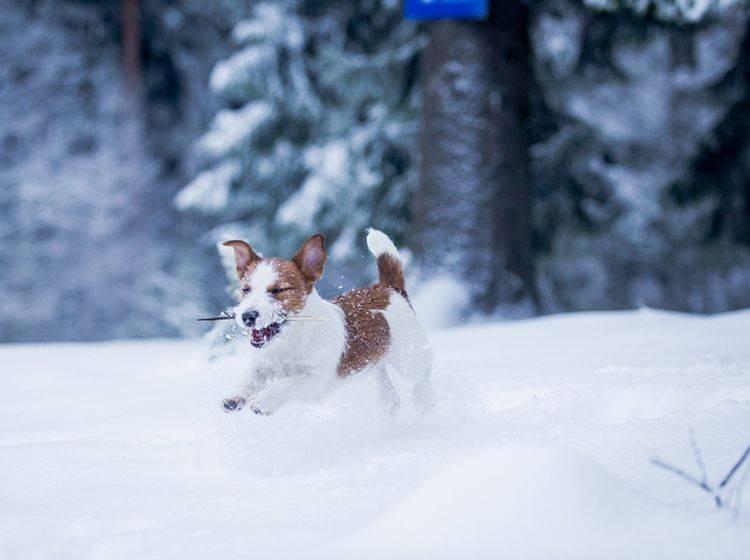 Ein Winterurlaub mit Hund bedeutet Spaß auf zwei und vier Beinen – Bild: Shutterstock / dezi