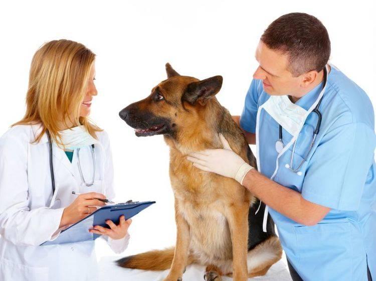 Regelmäßiger Checkup beim Tierarzt: Wichtig für den Hund
