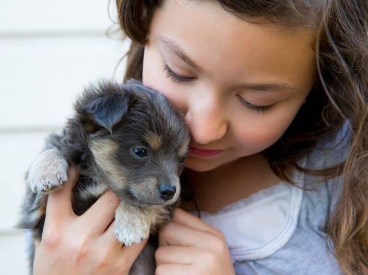 Hundewelpen Wann Ist Das Richtige Alter Fur Die Abgabe