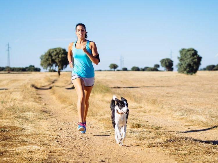 Joggen mit dem Hund: Erst, wenn die Grundkommandos sitzen – Bild: Shutterstock / Dirima