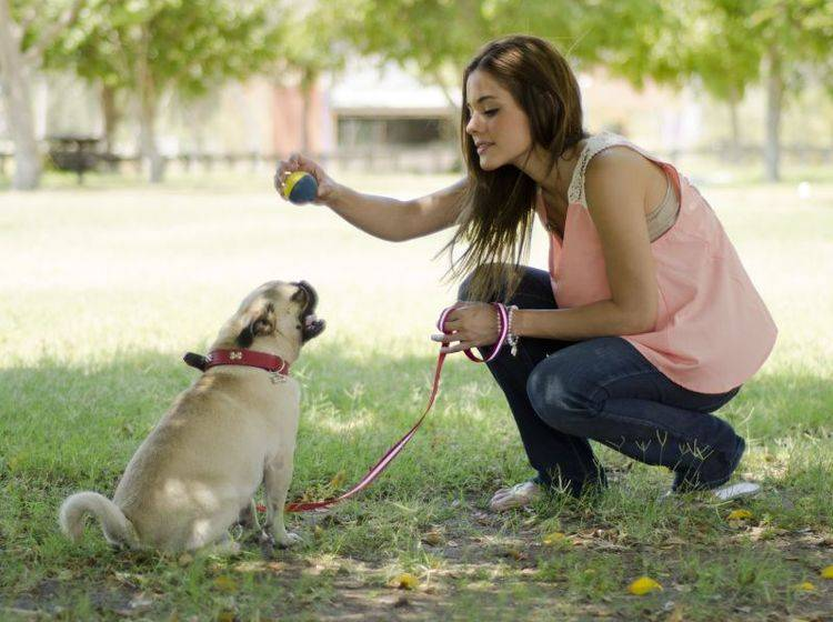 Spazierengehen, spielen, kuscheln: Zeit mit dem Besitzer ist dem Mops wichtig – Bild: Shutterstock / AntonioDiaz